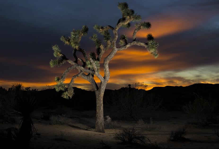 Joshua Tree Mid-Sunset