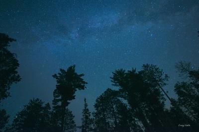North Woods Night Sky