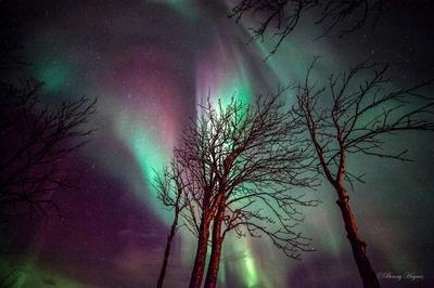 Aurora ay Roksøy jan 22. 2014