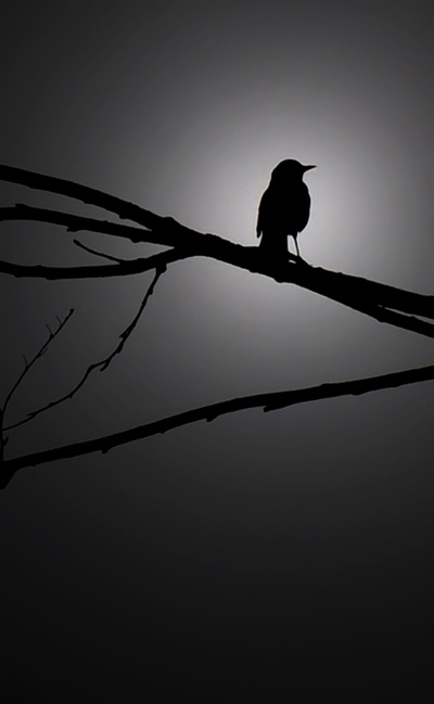 When the Nightbird Sings