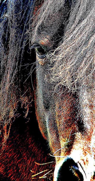 Sharp Pony