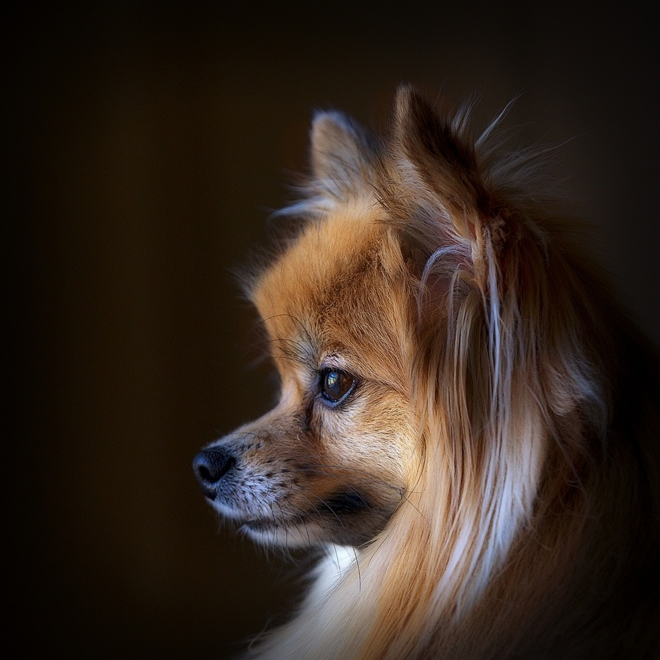 Pixel by OjaiImages - Pets With Character Photo Contest