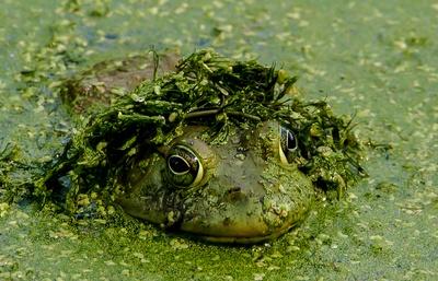 Best Frogs-