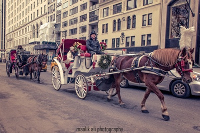 Horse and Carriage (1 of 1)
