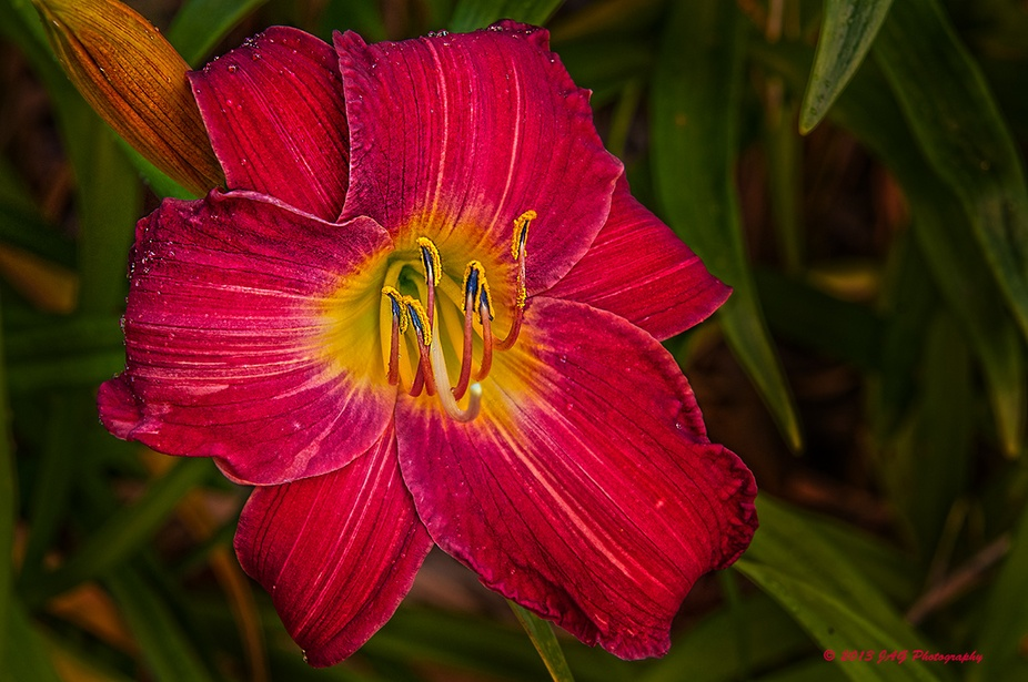 One of my lilies from my garden.  It is about -9 outside and I am working on last years flower ph...