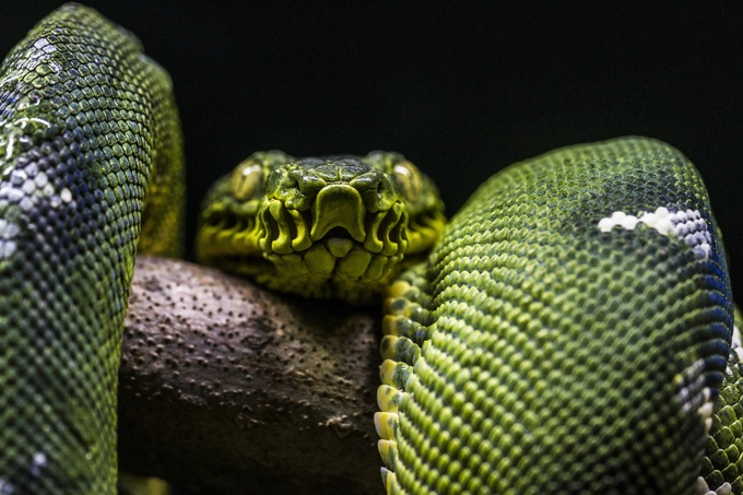 snake by rcscharf - Snakes Photo Contest