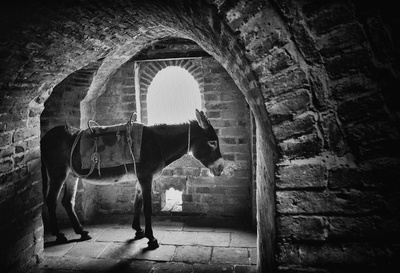 Donkey in the great wall
