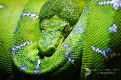 Stunningly Green