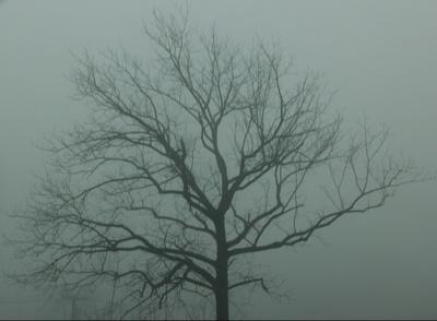 What lies beyond the fog