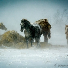 Another shot of our horses facing the storm.