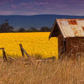 shed and canola 250911