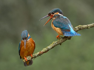 Call yourself a Kingfisher, where