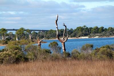Dead Tree in the Marsh
