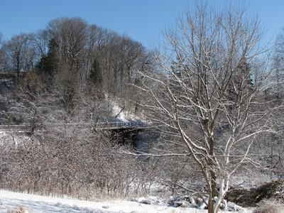 Winter Ravine