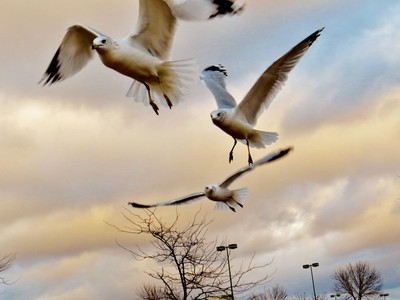 A Seagulls Dream