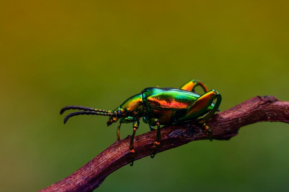 ...rainbowbug....
