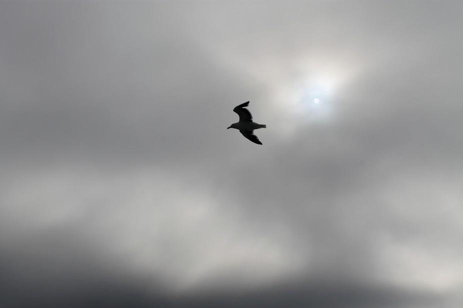 If I Had Wings Like Noah\'s Doves