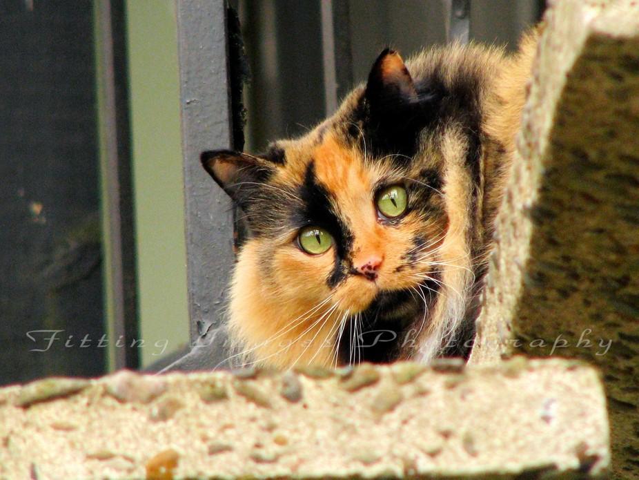 IMG_2027   jeans cat - WM