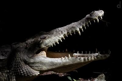 Croc me up!
