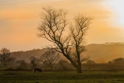 evening grazing