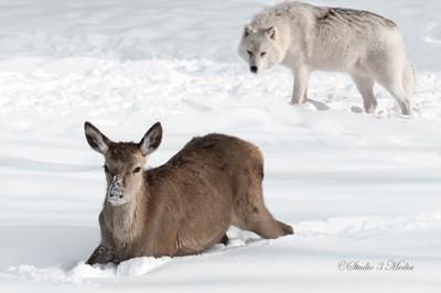 Arctic Survival-