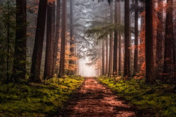 Forest path by joostlagerweij - Divine Forests Photo Contest