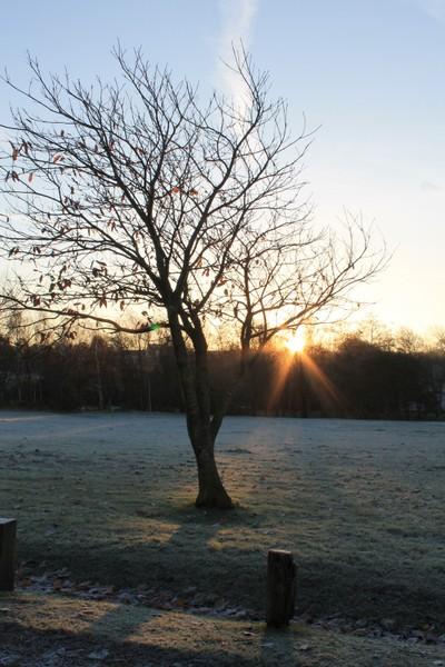 Frosty daybreak