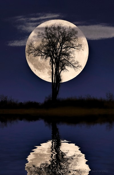 Lonely Tree Super Moon