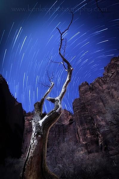 Temple Tree Star Trails
