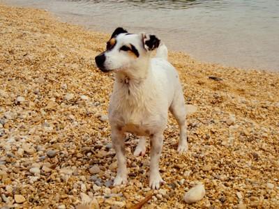 Doggy life