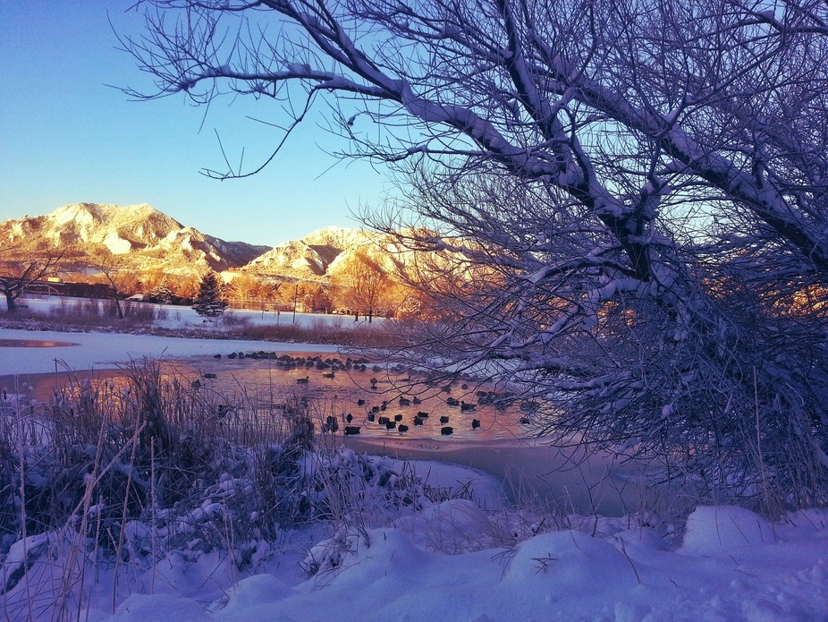 An icy pond on a frigid winter morning in Boulder, Colorado