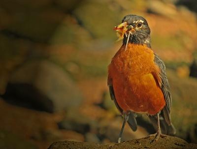 Robin Feast