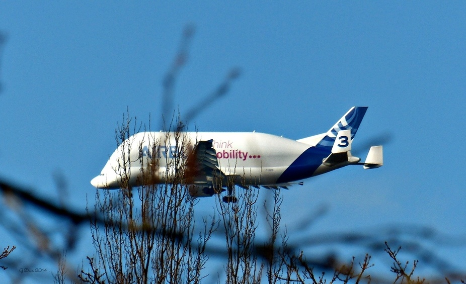 Taken from Chester Zoo, coming in to land at Manchester Airport