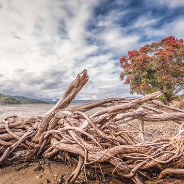 The tidal estuary in Whitianga, NZ