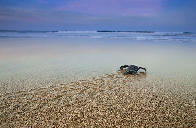 babyleatherback by drdw - Isolated Photo Contest