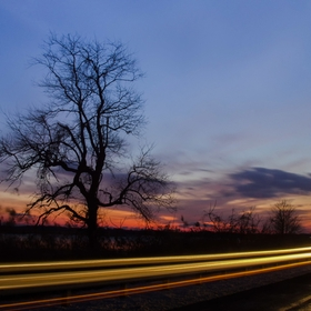 Wicked tree was created at twilight as a car was passing through the access road of the Reedy Point Marsh just outside of Delaware City Limits in...