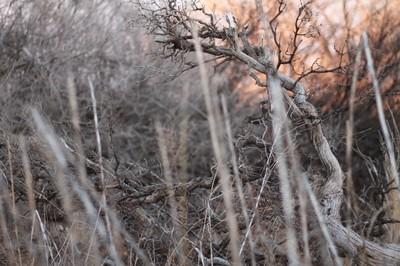Backyard Branches