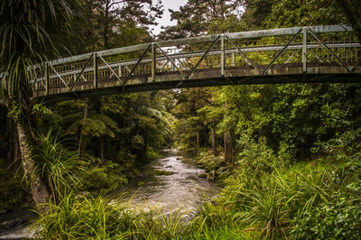 Whangarei Falls River
