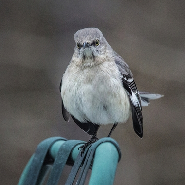 What do you mean Mocking bird?