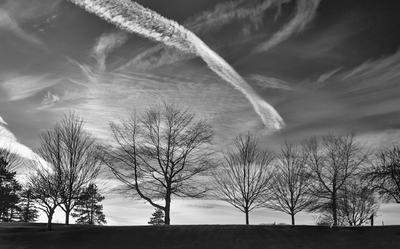 Winter Silhouette