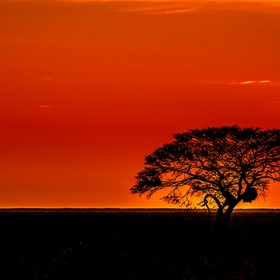 Just another sunset in Namibia. I focused on that weaverbird's nest in the tree, whose silhouette looks like the profile of a face. This photo is...
