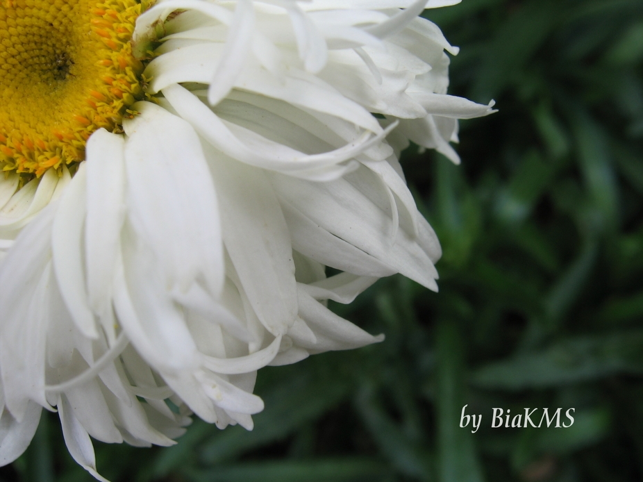 This is one of my favorite photos. I got it  when I still had my Canon A95.