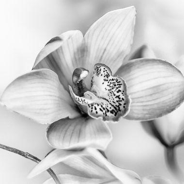 Sculptural Orchid