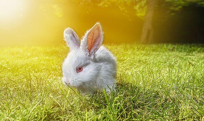 Easter Bunny by Scubadaddy - Baby Animals Photo Contest