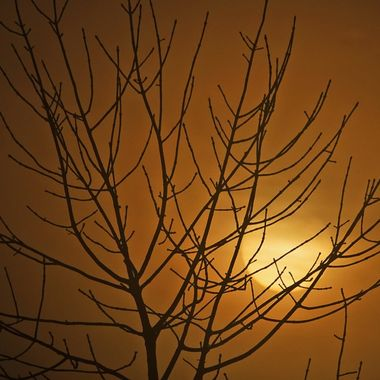 The sun rise seen through the branches of a bare tree on a misty winter morning.