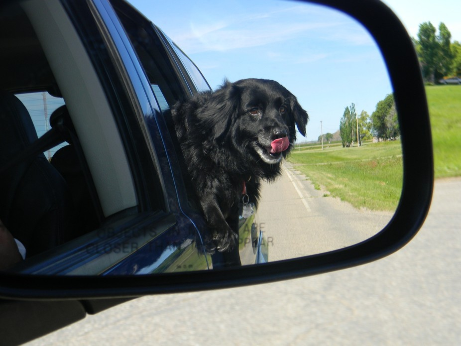 My rescue dog Tinkerbell loves hanging out the window --