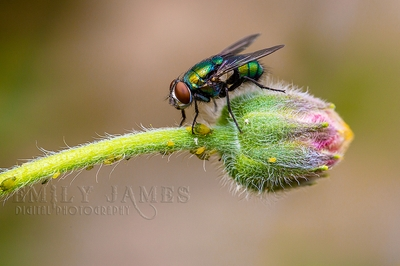 The humble fly