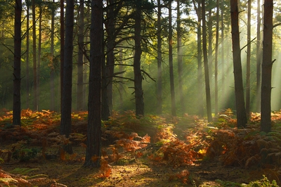 Rays shining in the forest