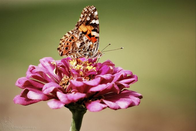 Butterfly by tpruessner - Beautiful Butterflies Photo Contest