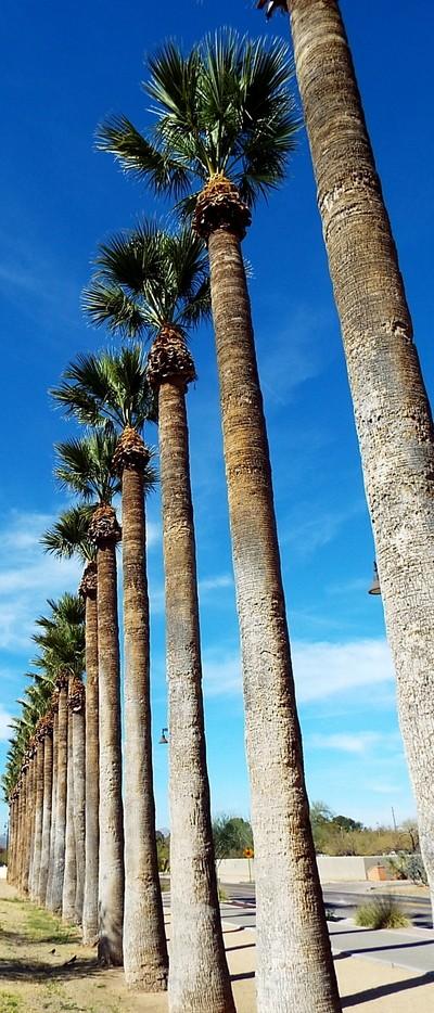 Palm Vertical Line